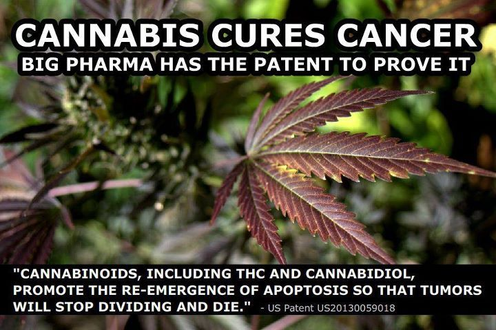 Marijuana cures cancer? Scientific research says probably not